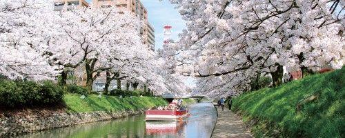 近日開花! とやまの桜スポット おすすめ3選!