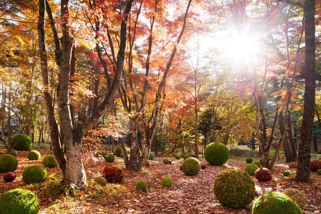 【軽井沢のアートイベント】軽井沢ホテルブレストン コート『Art of Forest2019』が開催