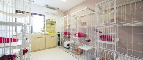 【富山ペット情報】ねこ専用ホテルをリニューアル! 大切な愛猫を預けるなら『パウ』